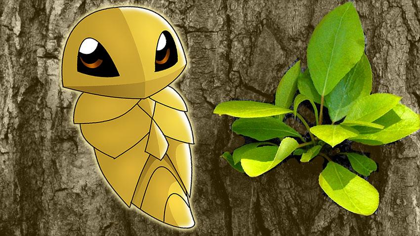 Kakuna описание, стадии эволюции Какуна в Покемон Го - картинка