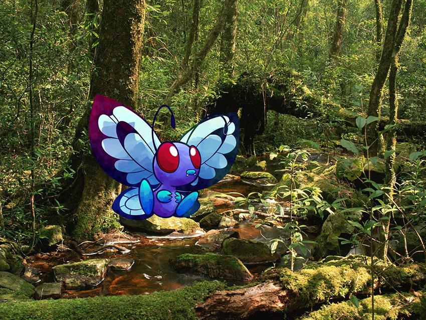 Место обитания Баттерфри - где и как найти в Покемон Го