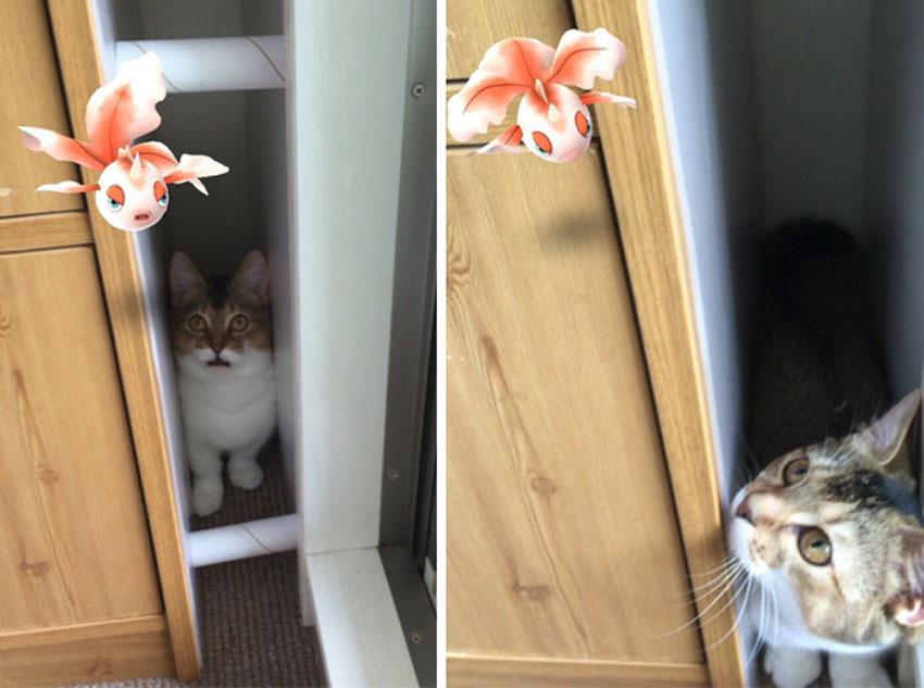 Кошки видят покемонов?