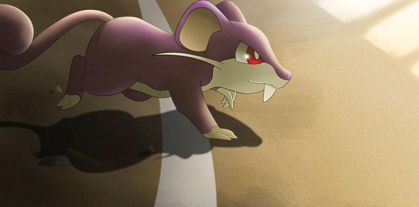 Способности покемона Раттаты - эволюция, где найти