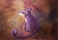 Rattata фиолетовый покемон крыса